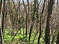 Costière du bois de Laie (Neyron, ZNIEFF) depuis le chemin des Grandes Terres (Neyron) - 1.jpg