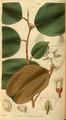 Curtis's Botanical Magazine, Plate 3072 (Volume 58, 1831).png