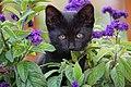 Czarny kotek.jpg