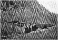 D077-couvent sainte-catherine au pied du djebel-musa.-L2-Ch5.png