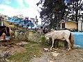 DSCI3080 Friedhof Maubisse.jpg