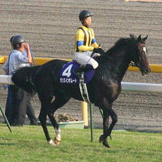 """Collection (horse) - Trotting with a shortened stride """"on the forehand,"""" rather than collected."""