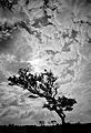 Dartmoor - Combestone Tor (6238390663).jpg