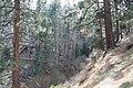 Davis Creek Park - panoramio (31).jpg