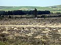 De-afforestation - geograph.org.uk - 398797.jpg