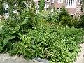 De Plantage (53).jpg