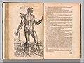 De humani corporis fabrica (Of the Structure of the Human Body) MET DP357361.jpg