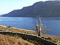 Dead tree above Haweswater - geograph.org.uk - 1065810.jpg