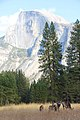 Deers and Half Dome in quiet day - Flickr - daveynin.jpg