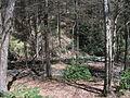 Delaware Water Gap National Recreation Area - Pennsylvania (5678351322).jpg