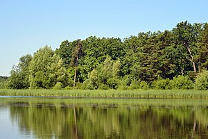 Derno Kivertsivskyi Volynska-Papyky protected tract-view from dam of the lake.jpg
