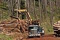 Deschutes National Forest, timber salvage logging-3 (36951211121).jpg