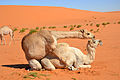Desert (6486255967).jpg