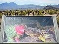 Desert Tortoise Info Stop - panoramio.jpg