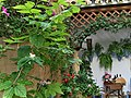Detalles de un patio de Córdoba.jpg