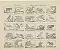 Dieren A.B.C. - histoire naturelle alphabetique.jpeg