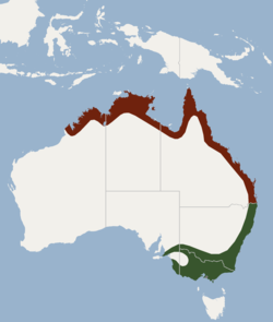 Distribution of Myotis macropus.png