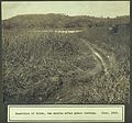 Ditch, two months after grass burning; Panama Canal construc Wellcome V0030225.jpg