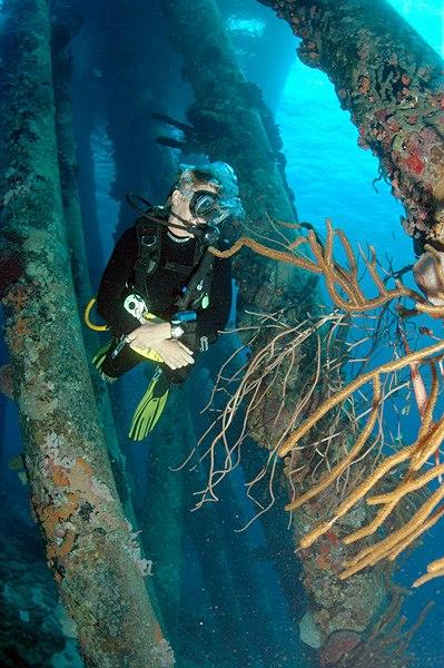 Diver under the Salt Pier, Bonaire, Dutch Antilles