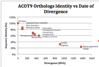 Acyl-CoA thioesterase 9 - Divergence of Sequence Identity (%) vs. Time (MYA) in ACOT9