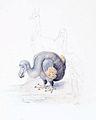 Dodo by Roelant Savery 1628.jpg