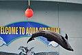 Dolphin kick - panoramio.jpg