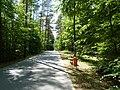 Droga w kierunku plaży - panoramio.jpg