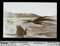 ETH-BIB-Lagune von Solnhofen- Pferodertylus, Archaeopteryx, Rhamphorhynchus-Dia 247-02444.tif