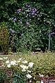 Easton Lodge Gardens, Little Easton, Essex, England ~ Verbena bonariensis purpletop vervain 1.jpg