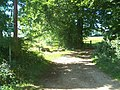 Edge of Louisehill Plantation - geograph.org.uk - 235727.jpg