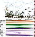 Effect of herbivore abundance in seagrass meadows.jpg