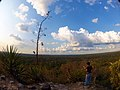 El Tintal Tropical Forest Canopy View.jpg