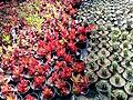 El Zohour Showroomمعرض الزهور بحديقة الاورمان 1.jpg
