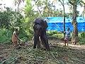 Elephant Guruvayoor Washing 006.JPG