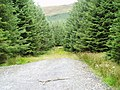 End of the forest track below Goat Craigs - geograph.org.uk - 537271.jpg