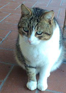 La Gatto Cat Cafe Tempe Az
