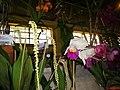Exposição Nacional de Orquídeas de Catanduva no Colégio Nossa Senhora do Calvário - Colegião - panoramio.jpg