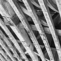 Exterieur KAP, DETAIL, AANTASTING DOOR KEVER - Zoeterwoude-dorp - 20274157 - RCE.jpg