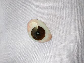 Ocular prosthesis - Human ocular prosthesis of brown color