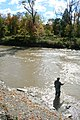 FAll in Erie Region and the Trout are on the run - panoramio.jpg