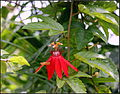 FLOWERS 4 (7238025048).jpg