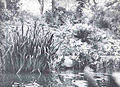 FMIB 34748 Another Portion of the -Larger Pond in the University of Pennsylvania Botanical Garden- Illustrating the Characer of the Shore.jpeg