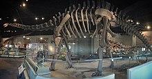 FMNH Apatosaurus Pano.jpg