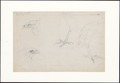 Falco aeruginosus - kop en poten - 1869 - Print - Iconographia Zoologica - Special Collections University of Amsterdam - UBA01 IZAA100106.tif