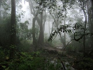 Northern Indochina subtropical moist forests ecoregion in Tropical and subtropical dry broadleaf forests