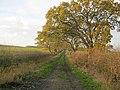 Farm track off Casthorpe Road (geograph 2748620).jpg