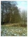 February Backstrike Winter Colors - Magic Rhine Valley Photography 2013 - panoramio.jpg