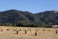 Field of hay near Solvang, California LCCN2013632344.tif