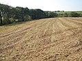 Field of stubble, Thorne Farm - geograph.org.uk - 982994.jpg
