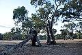 Flinders Ranges SA 5434, Australia - panoramio (100).jpg